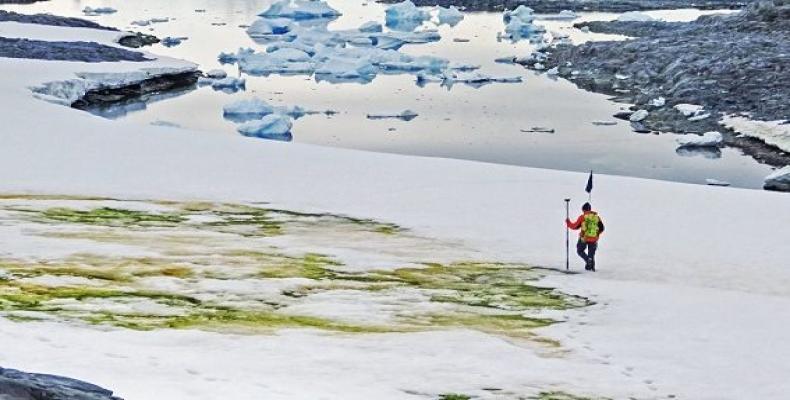 Floraciones de algas en la superficie de la Antártida. Foto:cam.ac.uk/RT.