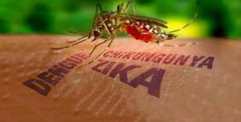 mosquito.Archivo