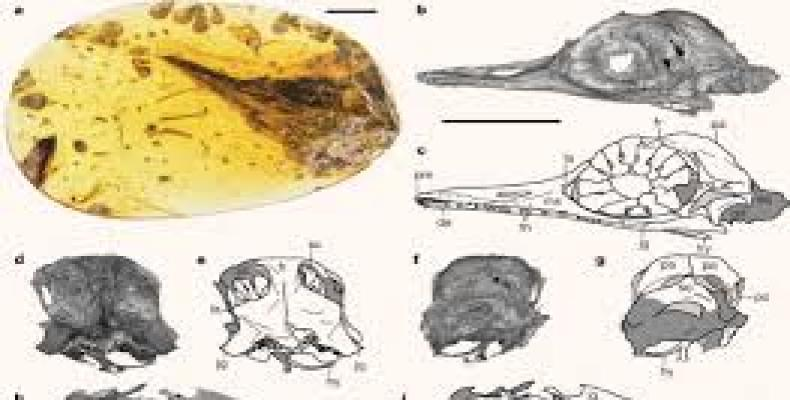 Fossil shows that miniature dinosaurs likely shared the earth with giants during the Mesozoic Era