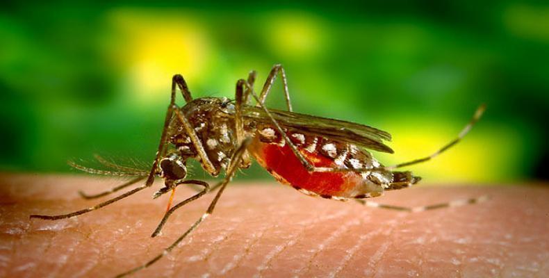 Organização Pan-americana da Saúde alerta para aumento de casos de febre amarela no Brasil.