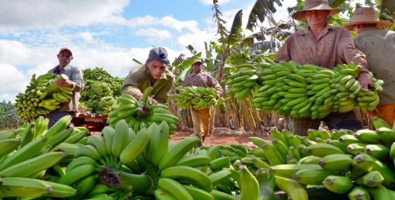 Con las crecientes producciones se mantiene estable la comercialización en los mercados agropecuarios estatales.Foto:RReloj.