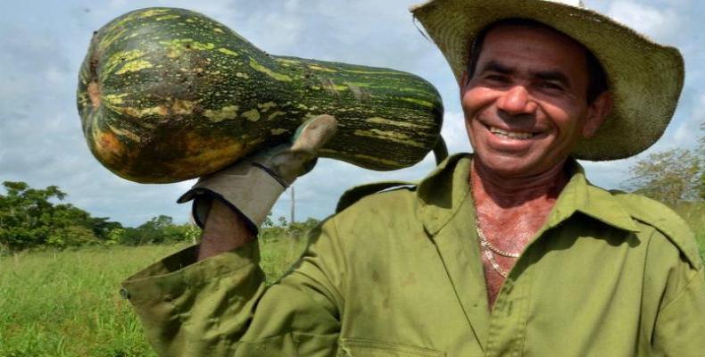Campesino del sector cooperativo en Camaguey. Foto / Rodolfo Blanco