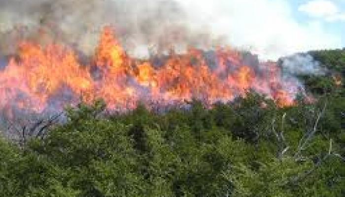 Datos preliminares revelan que resultaron dañadas alrededor de 800 hectáreas de bosques. Foto: Archivo