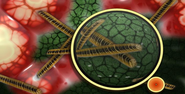 Las células tumorales tienen un ADN inestable que se rompe continuamente. Foto: Archivo