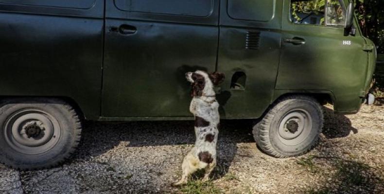 Cuba prepara un escuadrón de perros para detectar dinero.Foto:AFP.