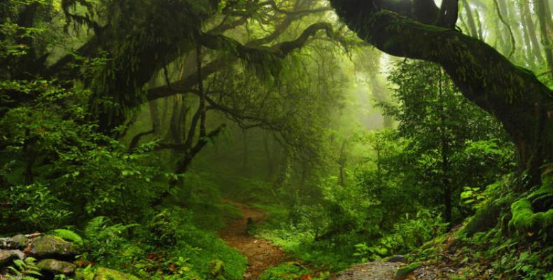 Al menos 390 mil especies de plantas son conocidas por la ciencia.Foto: autobild.es