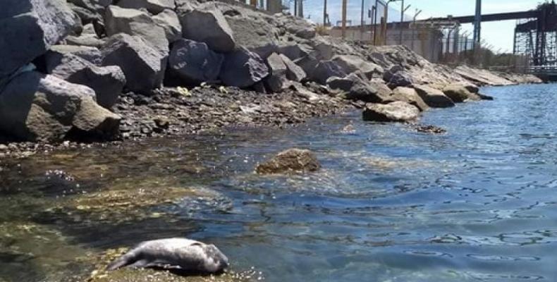 Derrame de ácido en Guaymas provocará muerte de fauna y flora en Mar de Cortés. Foto/Grieta   Medio para armar