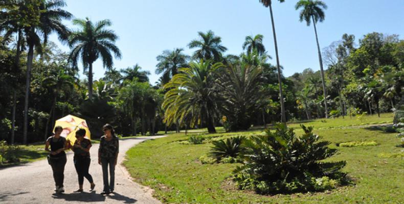 El jardín está emplazado en la cordillera cársica de la Sierra Maestra, cadena montañosa en la región suroriental de Cuba. Foto: Internet