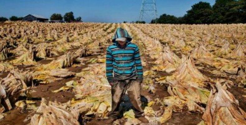 Jeune travaillant dans une plantation de coton aux États-Unis, photo par Human Right Watch