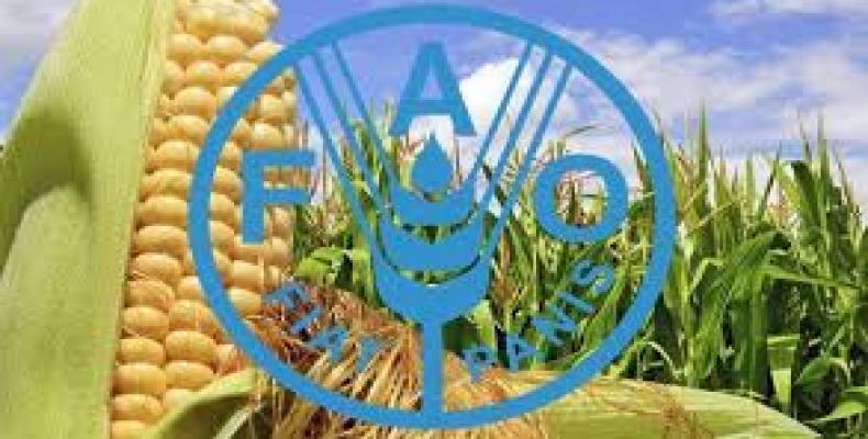 Logo FAO: Archivo